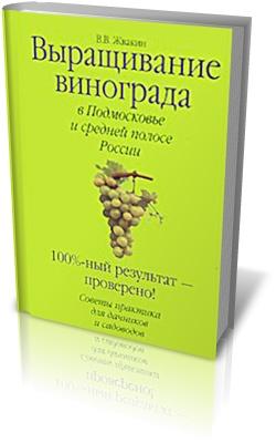 Выращивание винограда в Подмосковье и средней полосе России